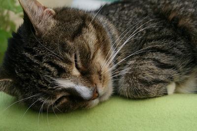 domestic-cat-3698104_960_720.jpg